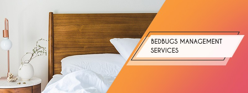 bedbugs management