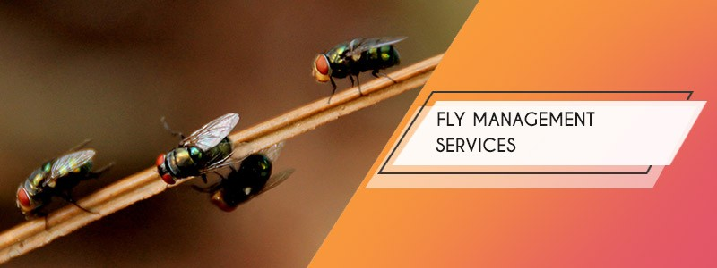 fly management