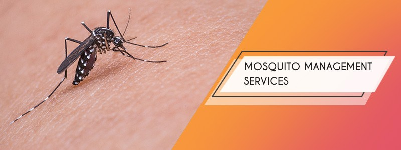 mosquito control services kolkata