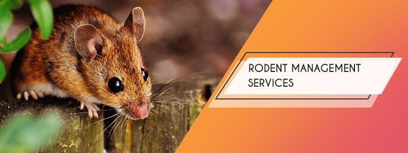 rodent management services kolkata