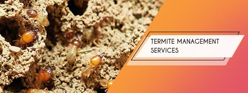 termite control services kolkata