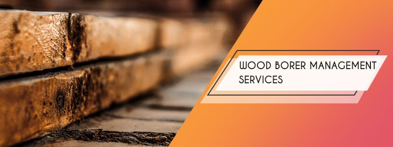 wood borer management