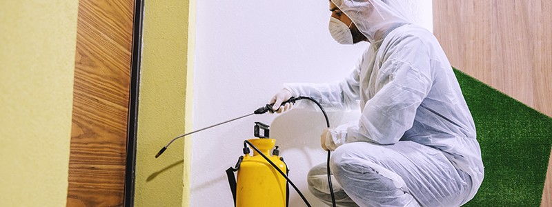 Affordable Pest Control Services in Dankuni