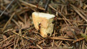 termite infetation kolkata